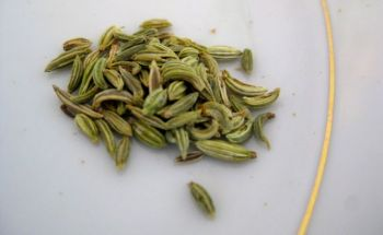 A whiff of tantalizing sweet licorice from these fennel seeds.